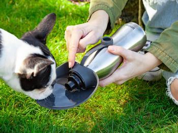 Utenu Vattenflaska för Hund
