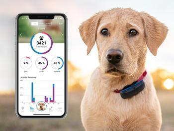 Tractive GPS-Tracker till Hund