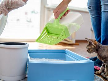 Scoop Up! Kattsandsspade med Behållare